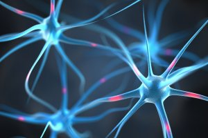 How Drugs Affect The Brain And Central Nervous System